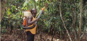 Pesticides on the cocoa plantation